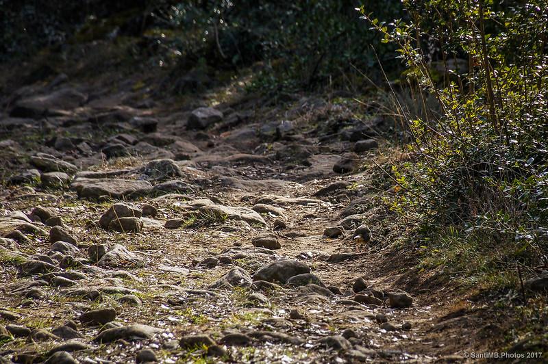 Un petirrojo camuflado en el camino