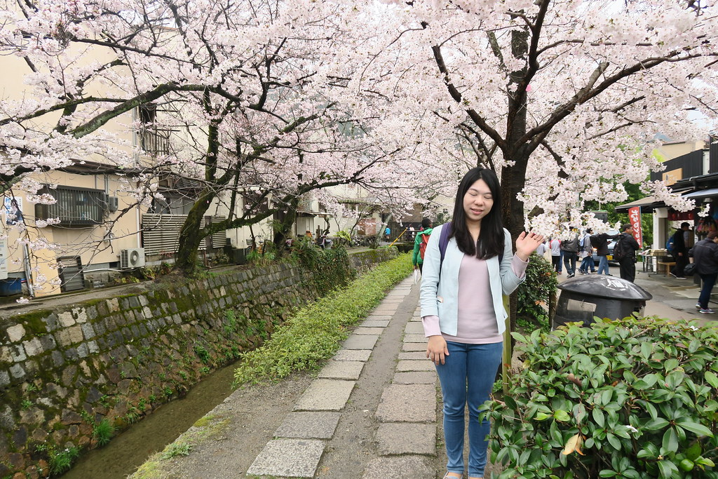 誇張的櫻花連艾瑪都被驚到不敢看了
