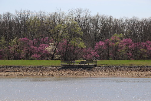 IMG_10067b_Redbud_Display