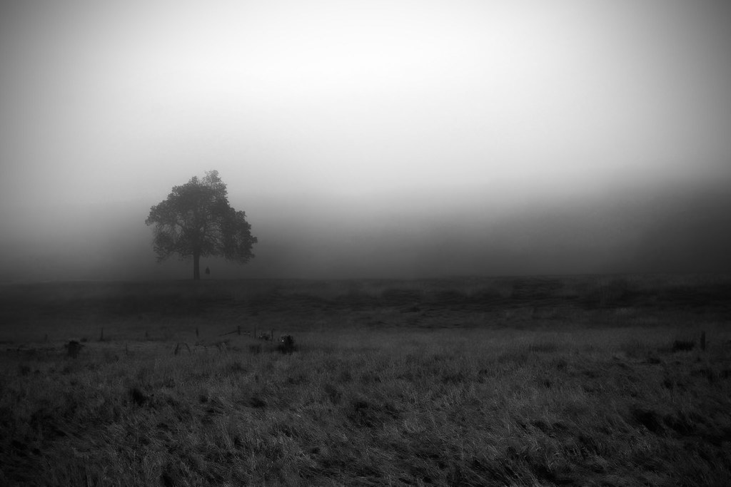 Foggy Field | Are you interested in using this photo in ...