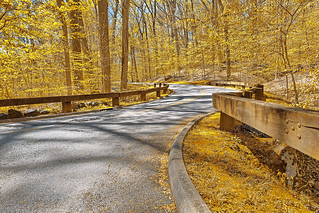 Gold Forest Road - HDR | by Bold Frontiers
