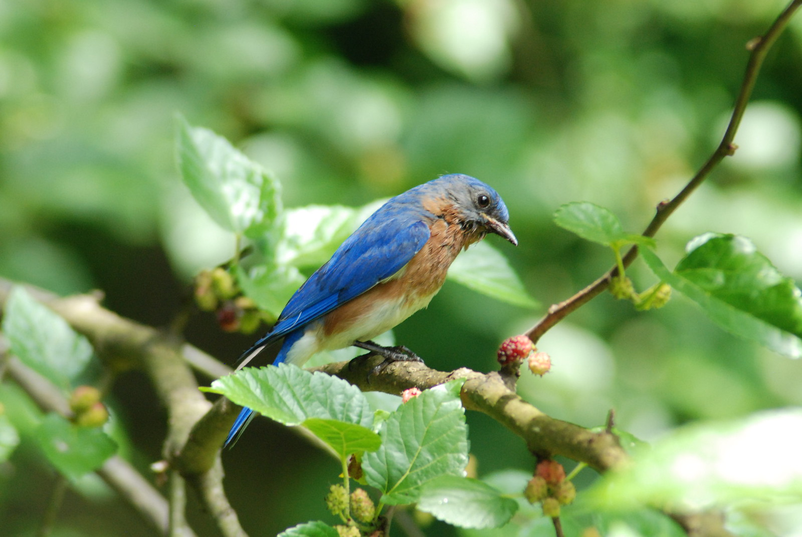 perfectly bohemian backyard birdwatching journal entry 1
