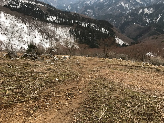 霊仙山 落合ルート 登山道