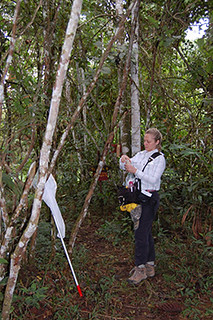 Carey hanging cardboard baited with chemicals to attract orchid bees | by kubiodiversity