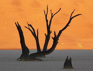 Deadvlei Dead Trees | by Namibnat