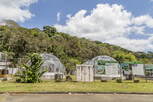 Smithsonian Tropical Research Institute - Tropical Dome Project gamboa panama pandemonio 2017 - 01 | by Eva Blue