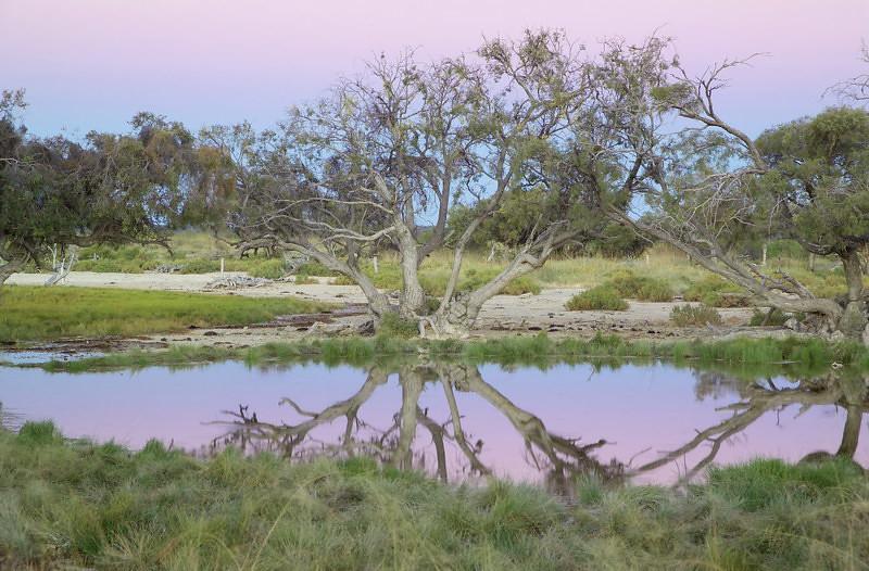 Artesian Spring At Bush Heritage Australia U0026 39 S Edgbaston Res