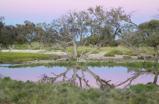 artesian spring at bush heritage australias edgbaston