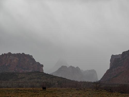 Terrace Rain