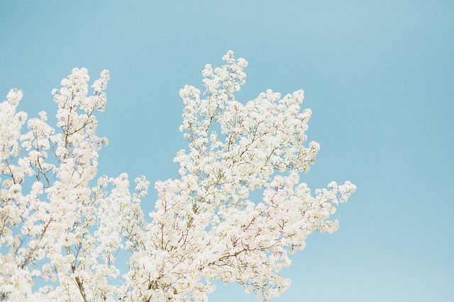 Blossoms-3
