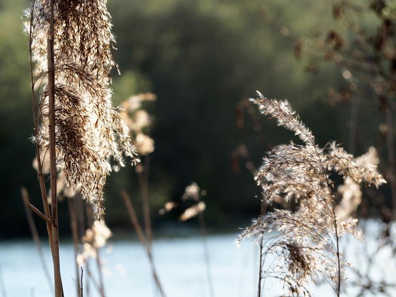 goring-pangbourne englanti
