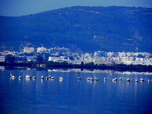 Tunisia: villages, mountains; sea, lakes ... ; Tunisia-Tunis-raoued beach; flament pink | by World Migratory Bird Day worldmigratorybirdday.org