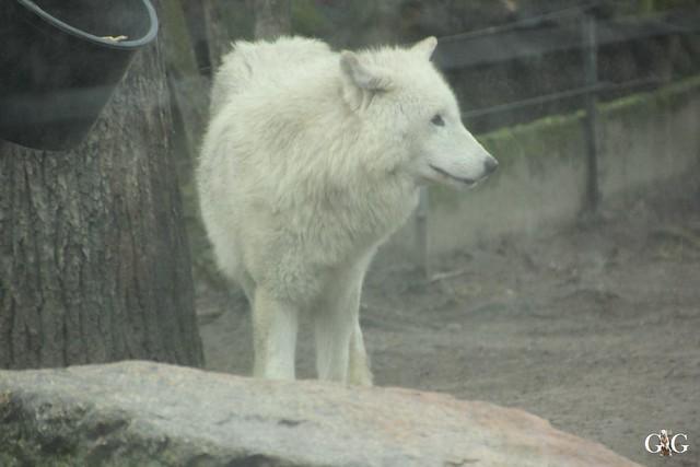 Besuch Zoo Berlin 26.02.201735