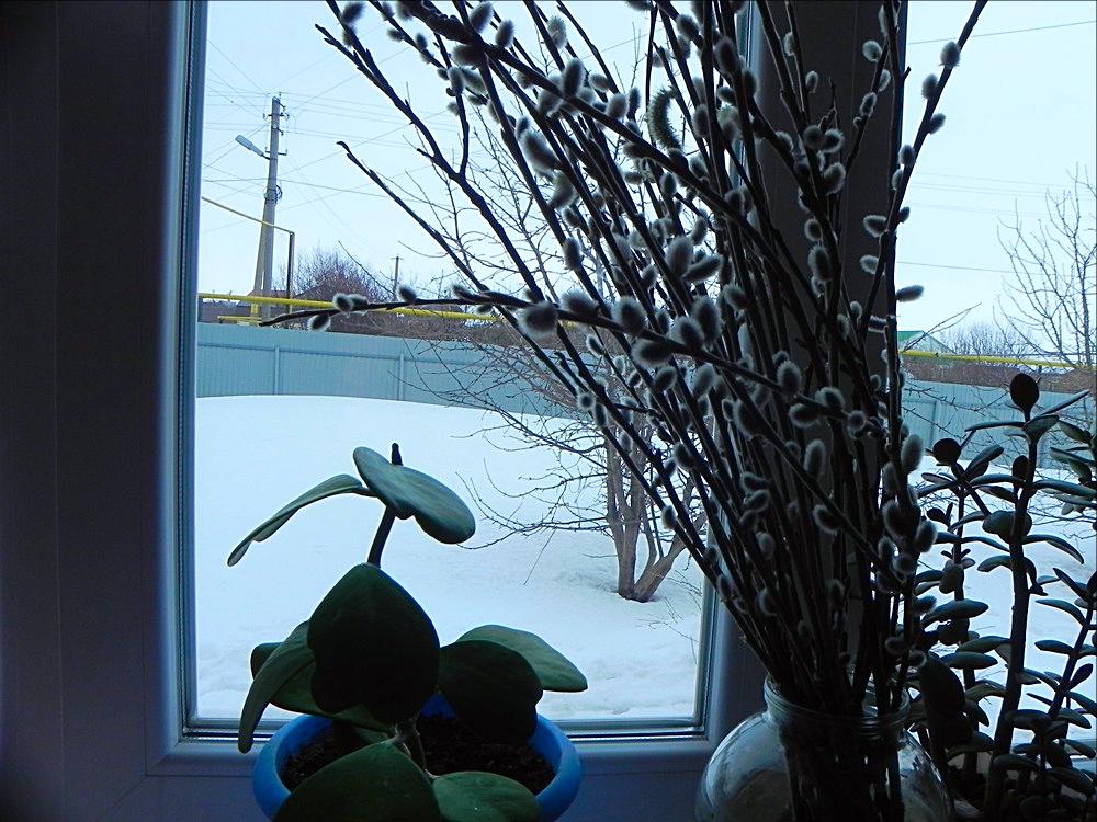 март дом зима...