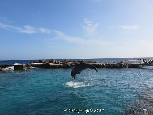 Synchronspringen der (Delfin-)Damen