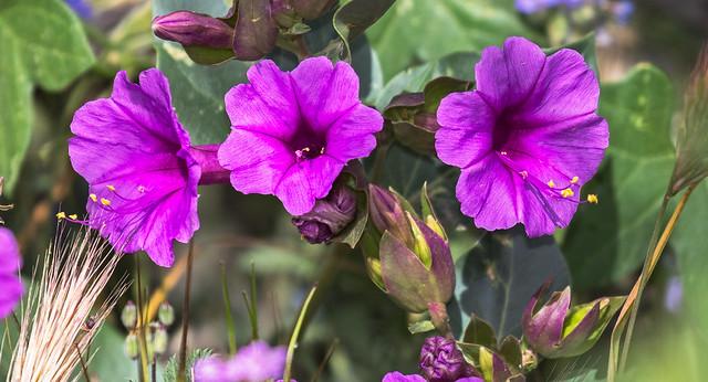 Flowers-67-7D2-040817