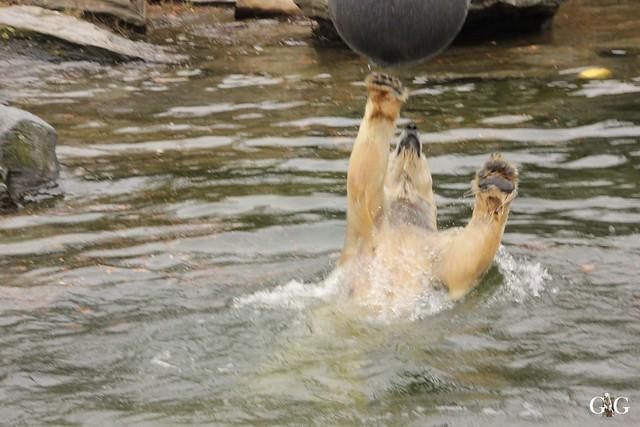 Tierpark Friedrichsfelde 19.03.201714