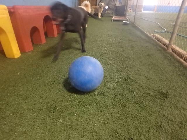 04/14/17 Indestructi-Ball Play! :D