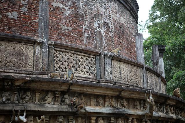 PW-Ceylon-Polonnaruwa6