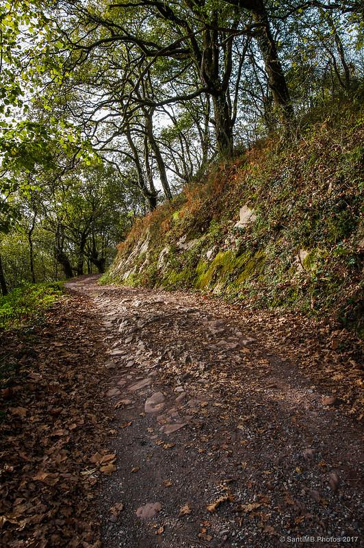 El camino de Orabidea entre robles
