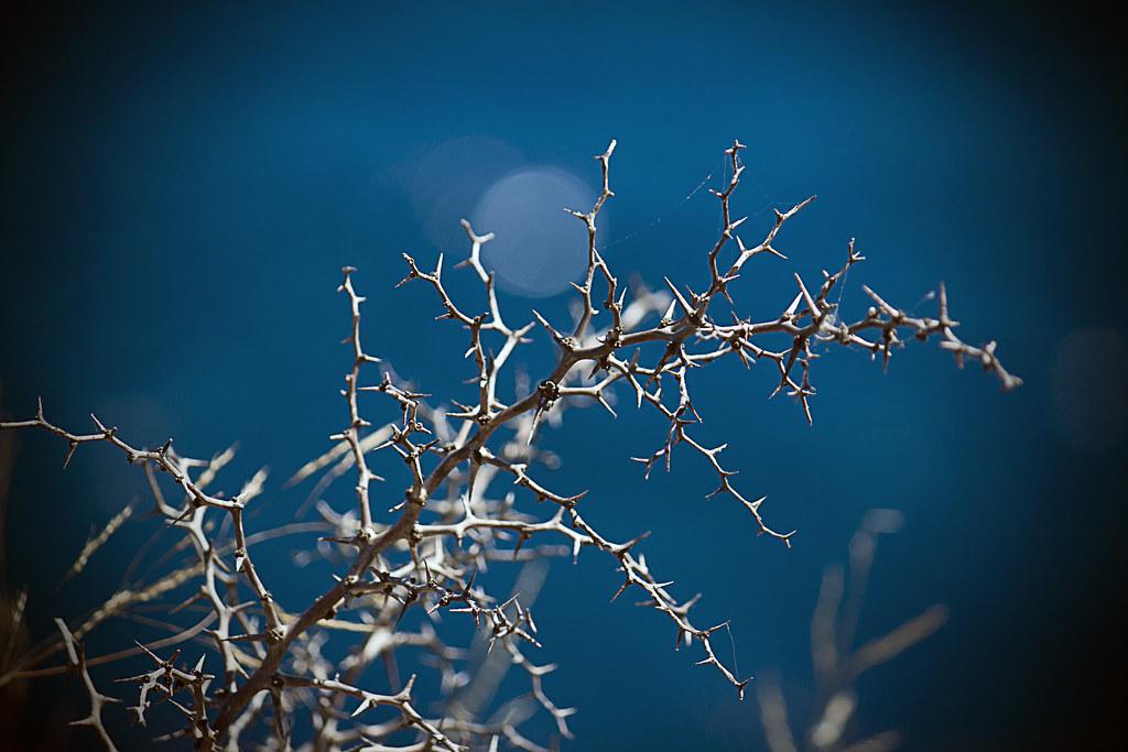 Cardos Y Espinas Yo Cultivo Cultivo Yo Una Rosa Bl Flickr