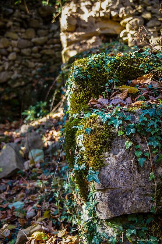 Verde sobre las piedras.