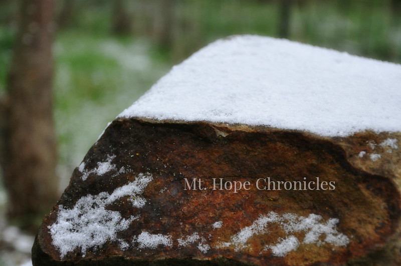The End of Winter @ Mt. Hope Chronicles