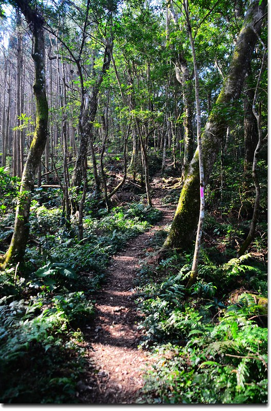高台山登山步道 5