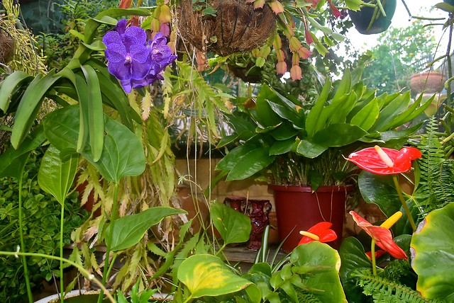 Our shadehouse plants provide an illusion of tropical Bali