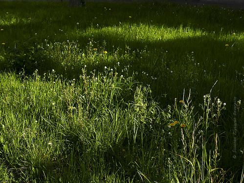 Luce sull'erba