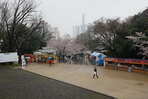 Sakura festival 2017 rany day