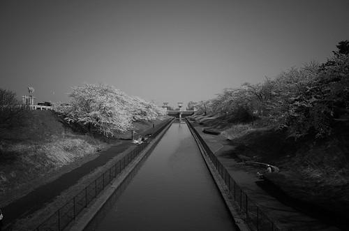 sakura memory 2017 4