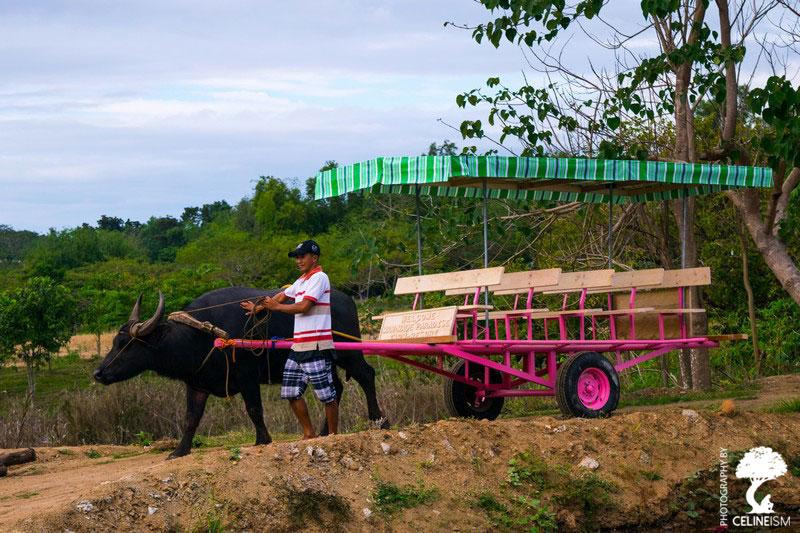 Transportation at the farm
