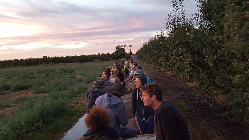In der leeren Obstkiste werden wir morgens halb 7 zur Obstplantage gefahren. Staunende und vielleicht auch ungläubige Gesichter zum Sonnenaufgang.