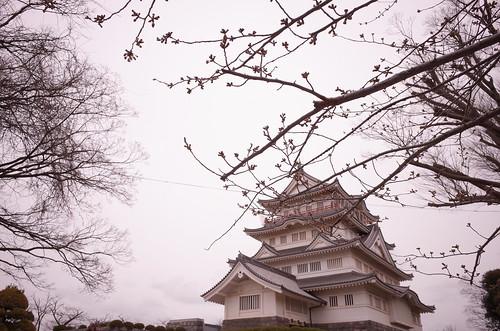 Chiba Inohanayama sakura blooming 04