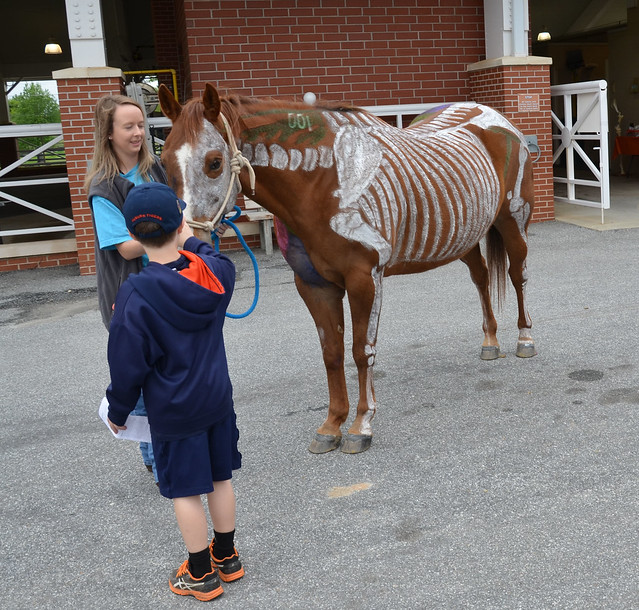 A horse on display during the College of Veterinary Medicine's A-Day open house.
