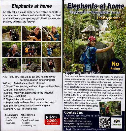 Elephants At Home Chiang Mai Thailand Brochure