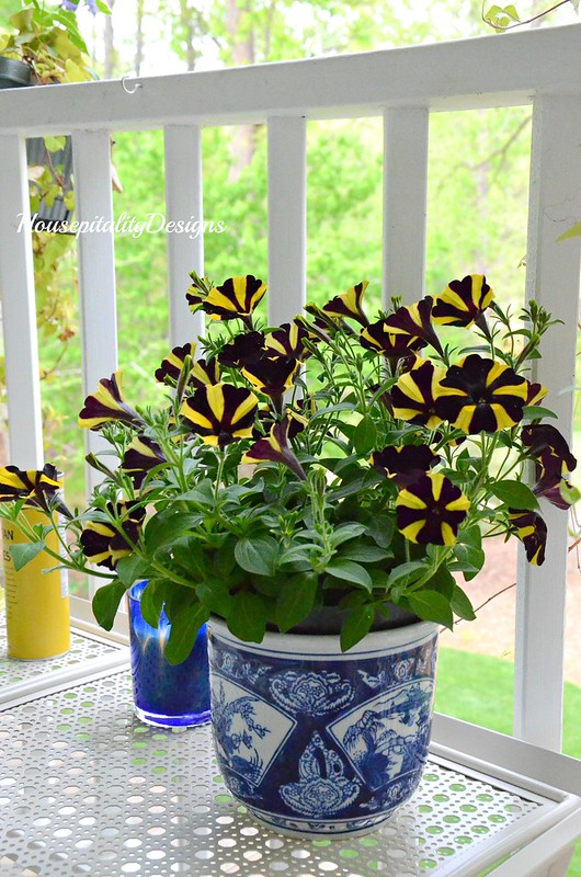 Yellow and Black Petunia-Housepitality Designs