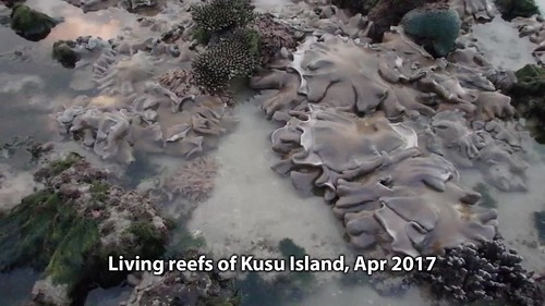 Living reefs of Kusu Island, Apr 2017