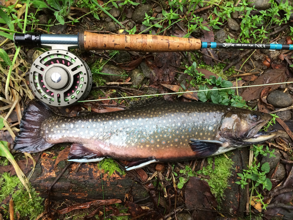 Brook trout rubicon river victoria australia a remnant for Fishing jobs in maine