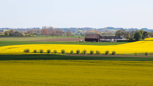 Yellow fields (Explore 2014-05-09) | by Infomastern