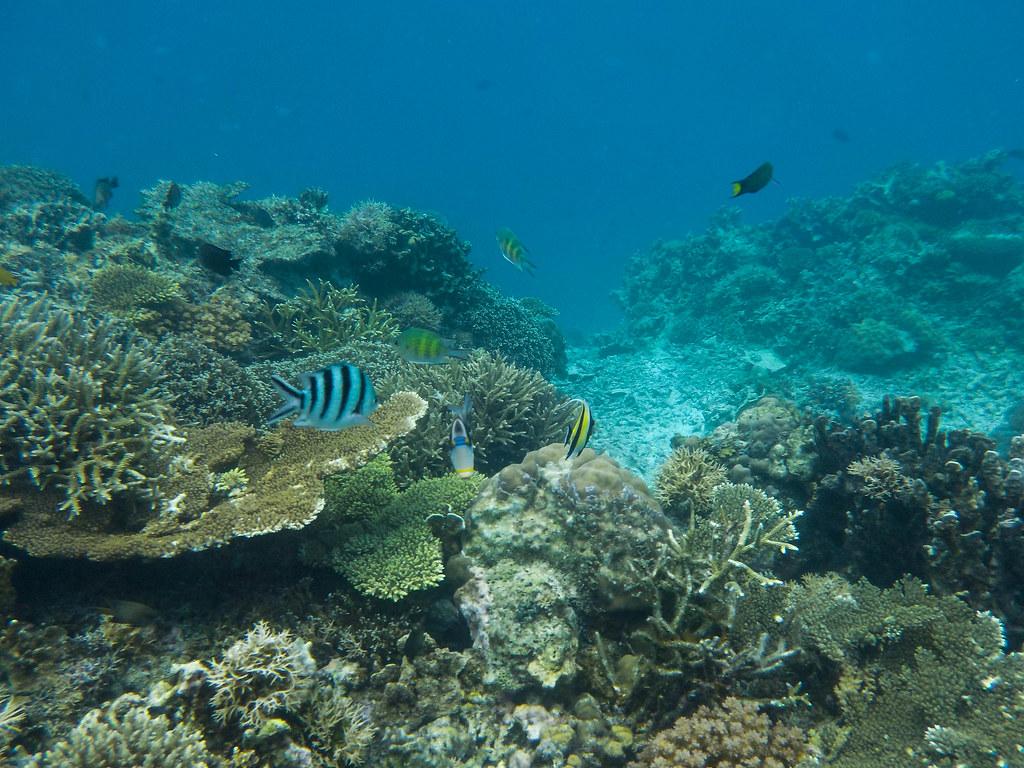 Snorkel Mantinloc Shirne