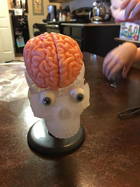 Future Brain Surgeons