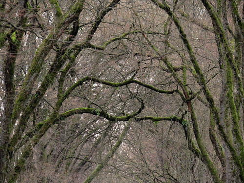 Bare trees in early spring