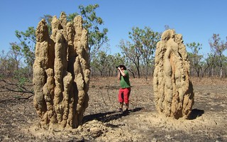 Cathedral Termite Mounds in the Northern Territory | by ebygomm