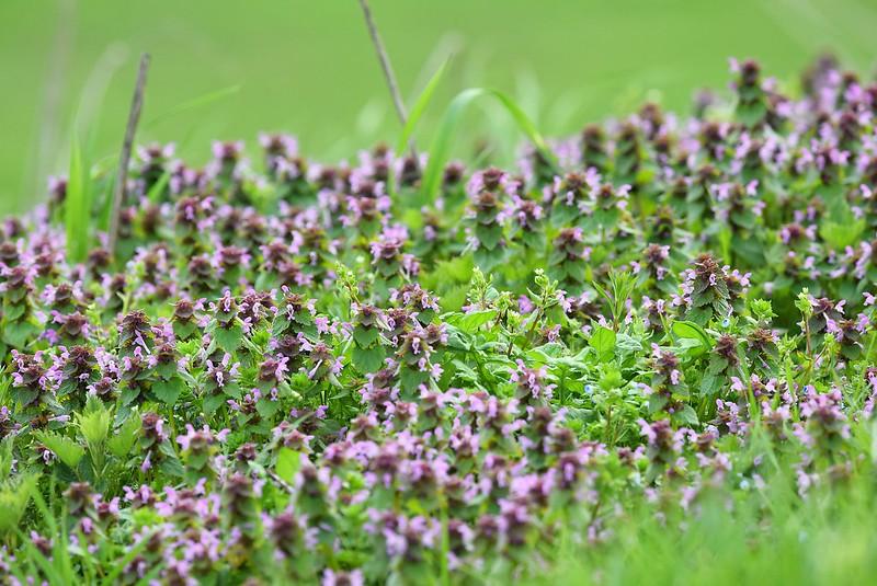 Wild flowers 24.03 (3)