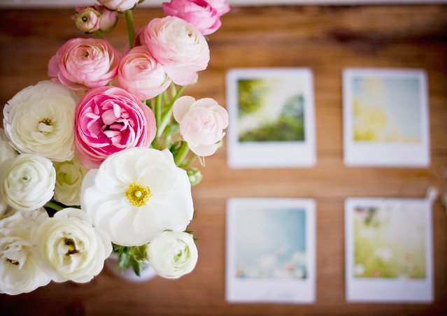 Ranunculus and Polaroids | by Kristybee