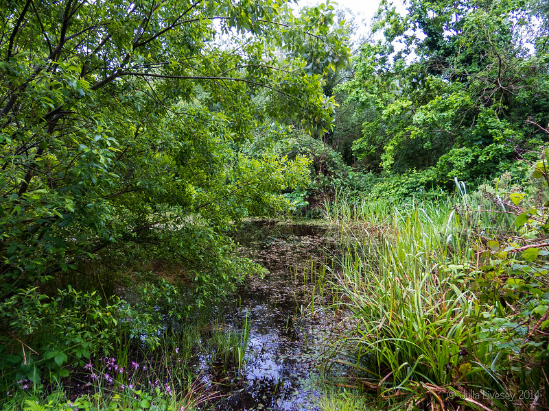 Pond at Steamer Point Nature Reserve