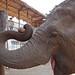 Elephant Nature Park Chiang Mai-11