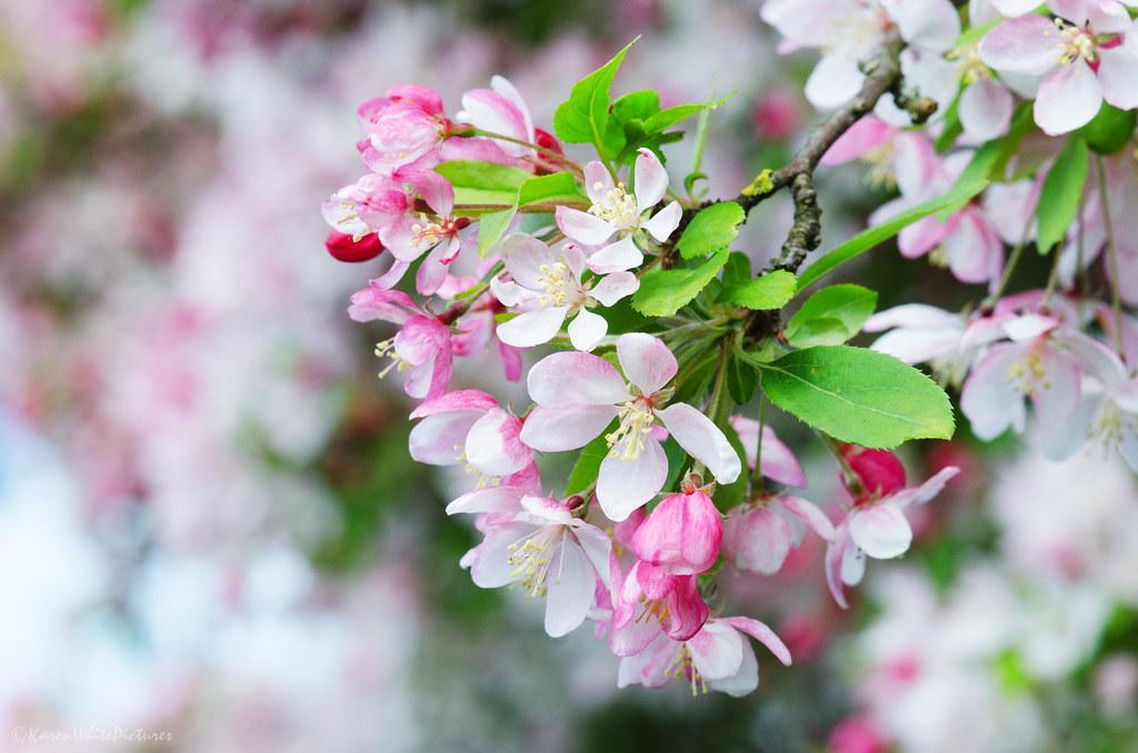 ilkbahar fotoğrafları
